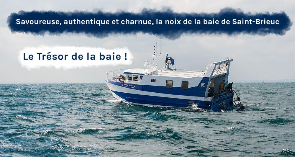 Authentique noix de Saint-Jacques de la baie de Saint-Brieuc le trésor de la baie