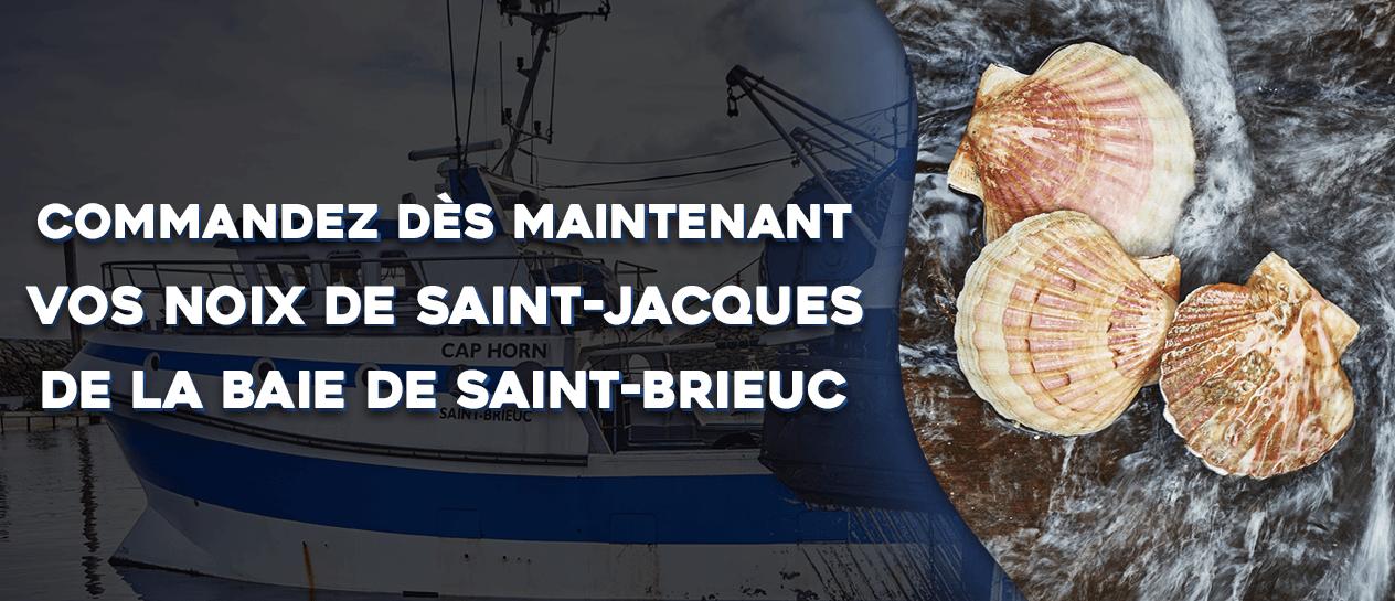 Acheter Noix Saint-Jacques Baie de Saint-Brieuc