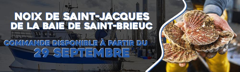 Noix de Saint-Jacques de la Baie de Saint-Brieuc